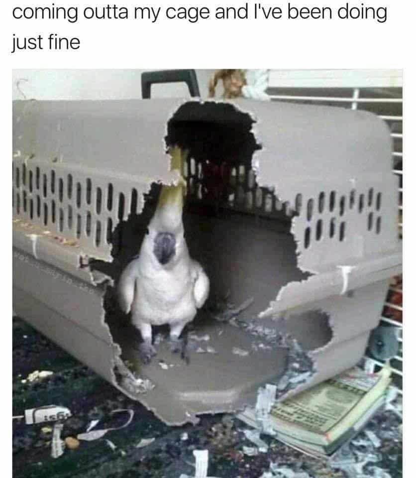 Killers budgie cage mem