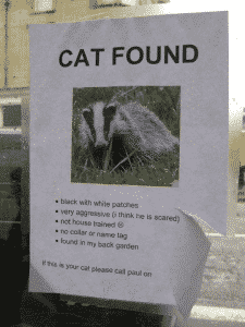 Cat Found Badger Poster