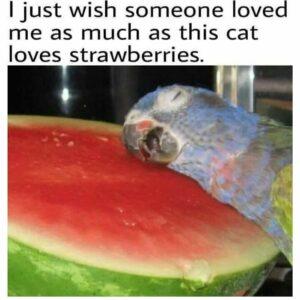 Parrot loves water melon memes